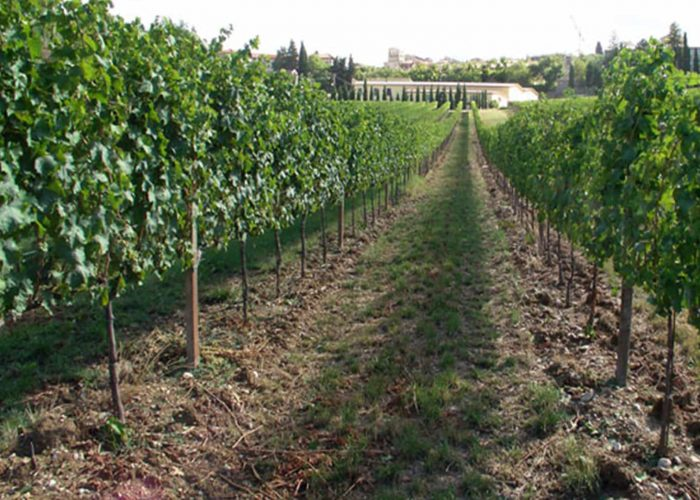 Harvest and climate change: the commitment of Cantina Fratelli Pardi